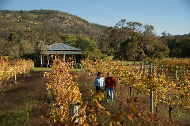TWA Couple in the autumn vines at Abbey Creek Wines located in the Porongurup Range 800