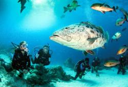 images/Tauchen/Dive-Advanced/TQLD-Tauchen11-800.jpg