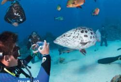 images/Tauchen/Dive-Advanced/TQLD-TauchenKamera-800.jpg