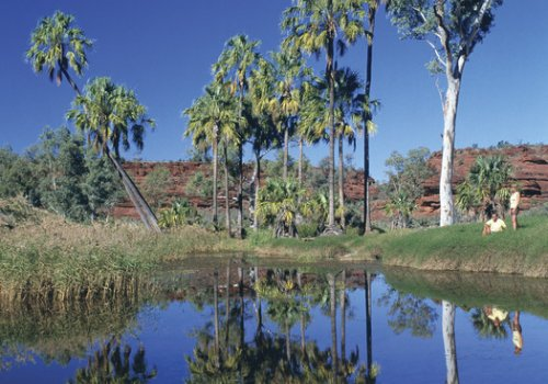 Ausflug ins Palm Valley