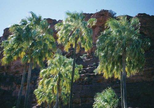 Palm Valley & Finke Gorge National Park