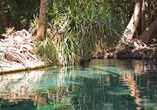 Baden in heißen Quellen im Northern Territory