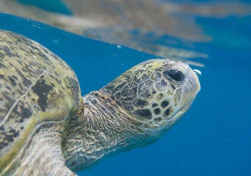 Schildkröten in Mon Repos