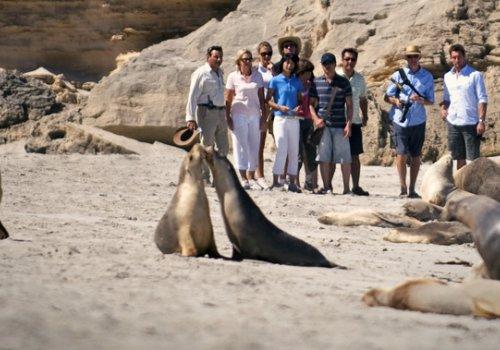 Kangaroo Island - Was gibt es zu sehen?