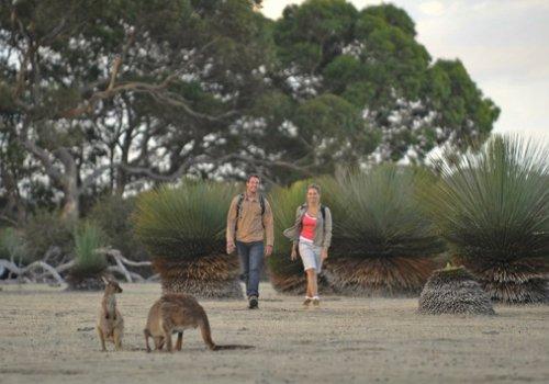 Aktivitäten auf Kangaroo Island