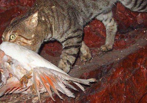 Eingeschleppte Arten bedrohen die australische Tierwelt
