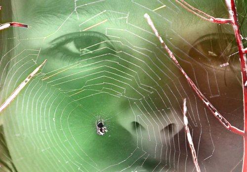 Ein kleiner Guide gegen die Angst vor Spinnen & Schlangen
