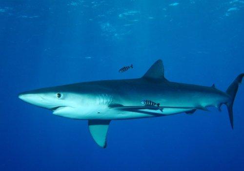 Infos zu Haien