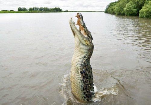Infos zu Krokodilen