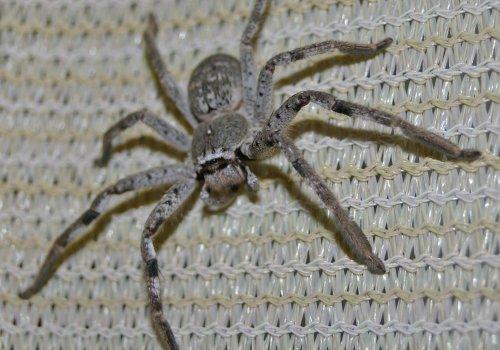 Infos zu Spinnen