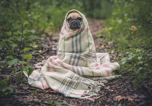 Mit dem Haustier auf Reisen?